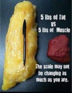 脂肪と筋肉 違い